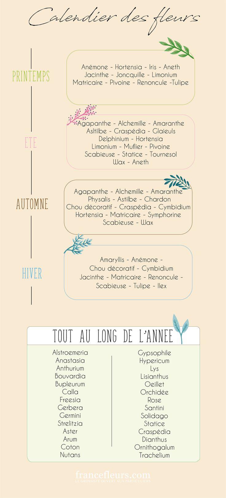 Gypsophile pas cher - livraison fleurs express - France Fleurs