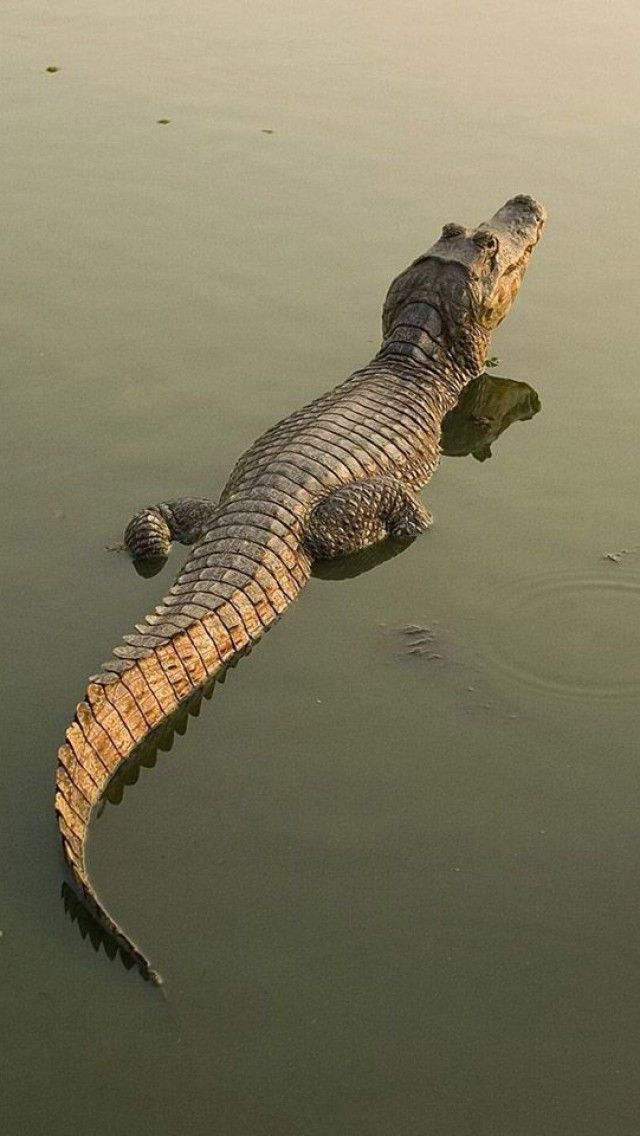 Give us a smile crocodile.