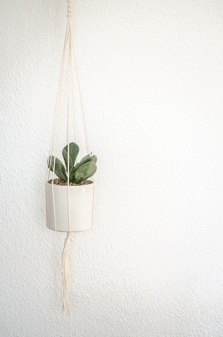 natural plant hanger - monoshop