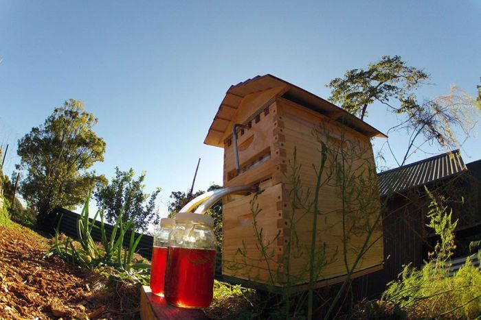 In 2015 Stuart Anderson and his son Cedar invented the Flow Hive, a method of collecting honey does not disturb the hive, but allows the honey to flow out through a channel system straight out of a tap.