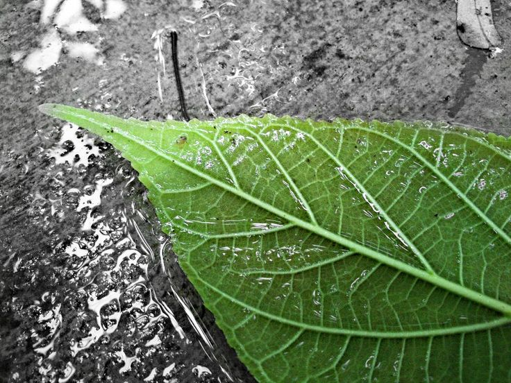 Photo Gallery: Editing Photos with Color Splash Effect - Create + ...