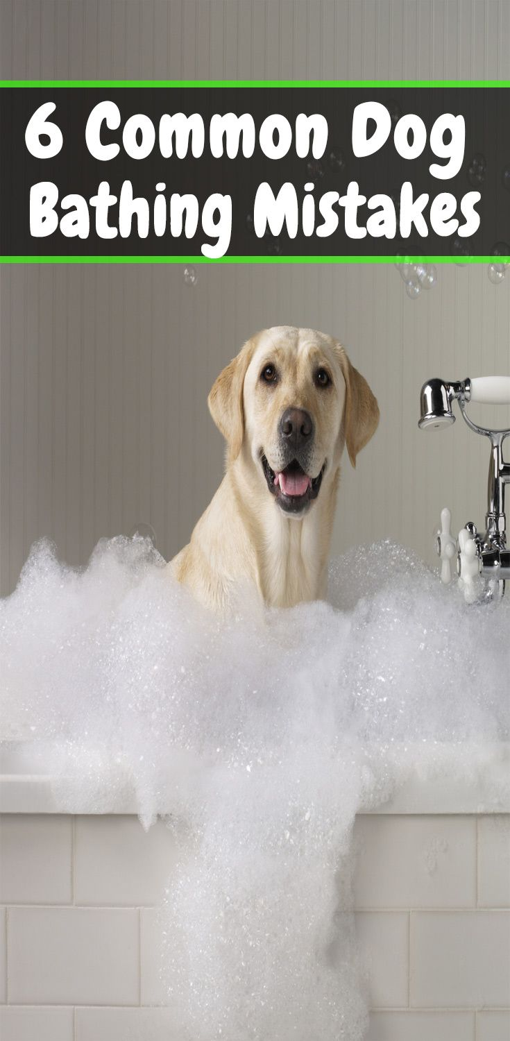 6 Common Mistakes You Make While Bathing Your Pet Bathing A