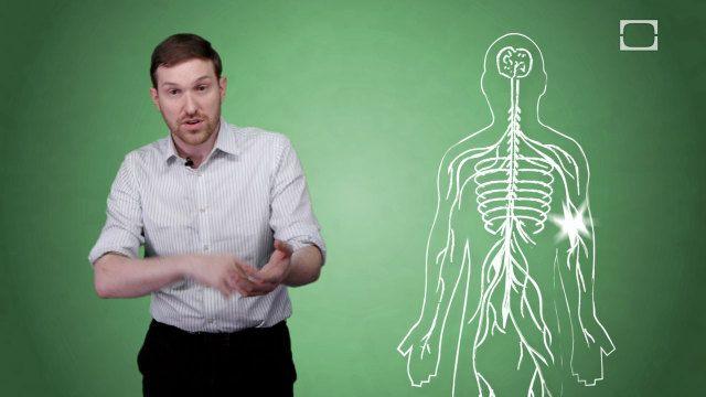 Why do limbs fall asleep? [video]