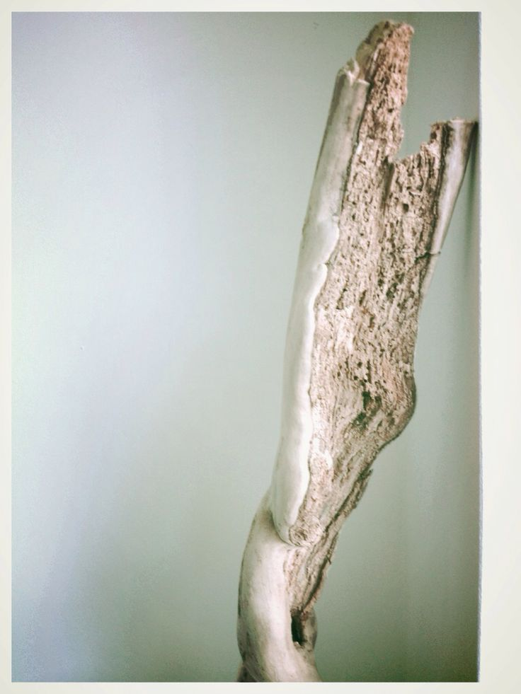 Beautiful piece of driftwood, found on a surfing beach in South of France last summer