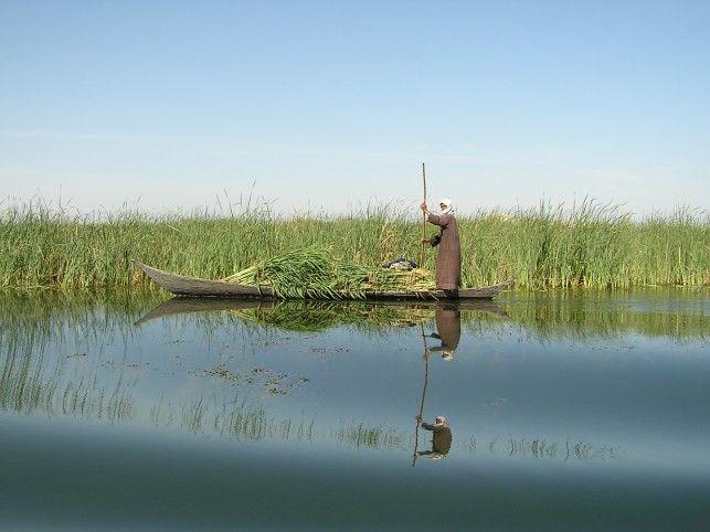 Der erste Nationalpark Iraks: Nach und nach kehrt das Leben in das mesopotamische Marschland zurück.