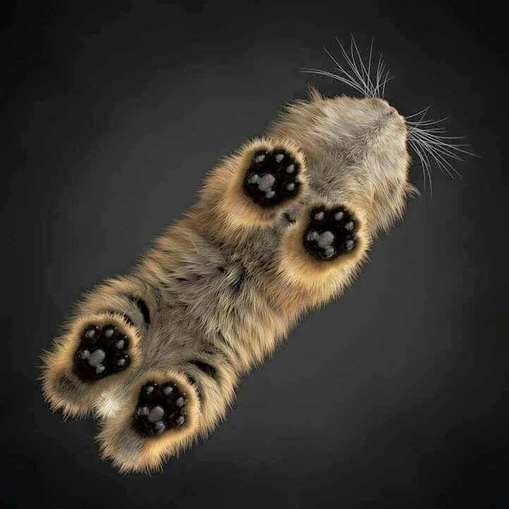Las zarpas de un gato, vistas desde abajo.