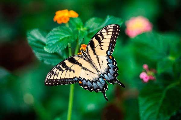 Pin De Estrella Torres En Inteligencia Naturalista Fotos De Mariposas Imagenes De Mariposas Alas De Pájaro