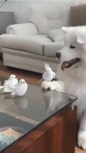 In The Living Room, The Birds Are Very Friendly To The Dog