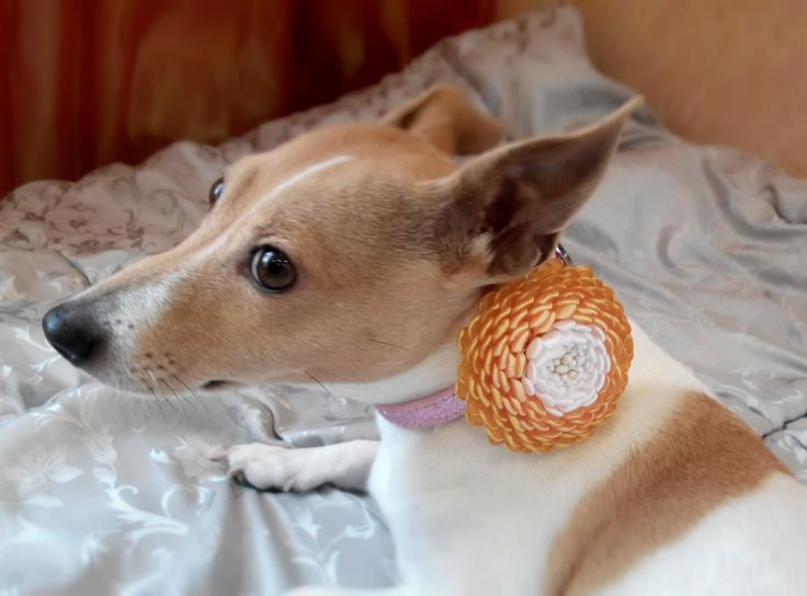 Flor de collar de perro collar de perro flores de por AirinFlowers