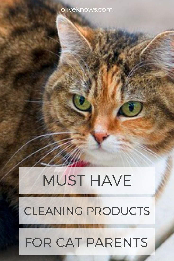 Must Have Cleaning Products For Cat Parents Oliveknows Cat Parenting Cats Cat Care