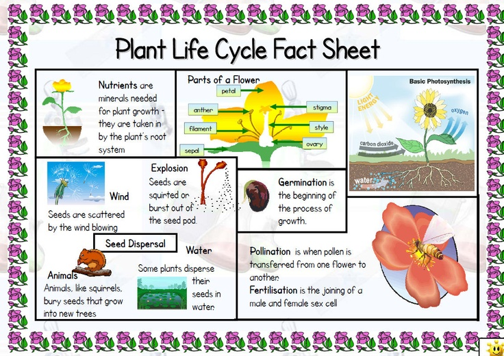 A4 fact sheet to support the teaching of this topic (5B). One side includes key information with picture support and clearly printed text while the other side has a glossary of appropriate vocabulary.