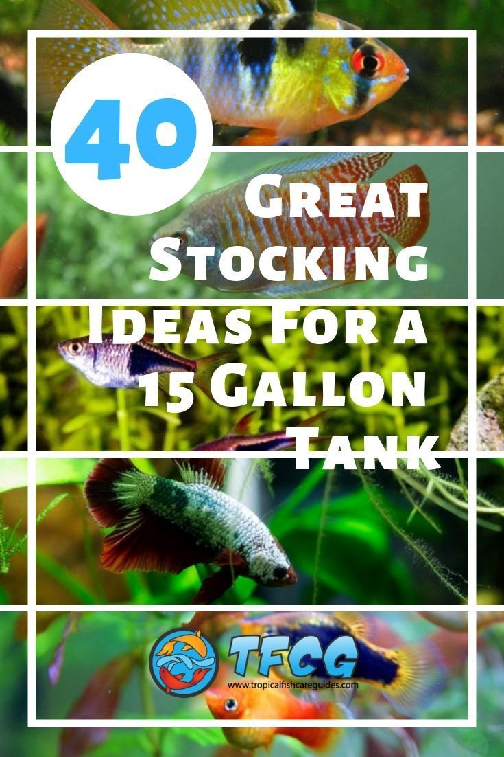 Stocking A 15 Gallon Tank You Won T Believe The Fish We Picked Community Fish Tank Fresh Water Fish Tank Fish Tank Plants