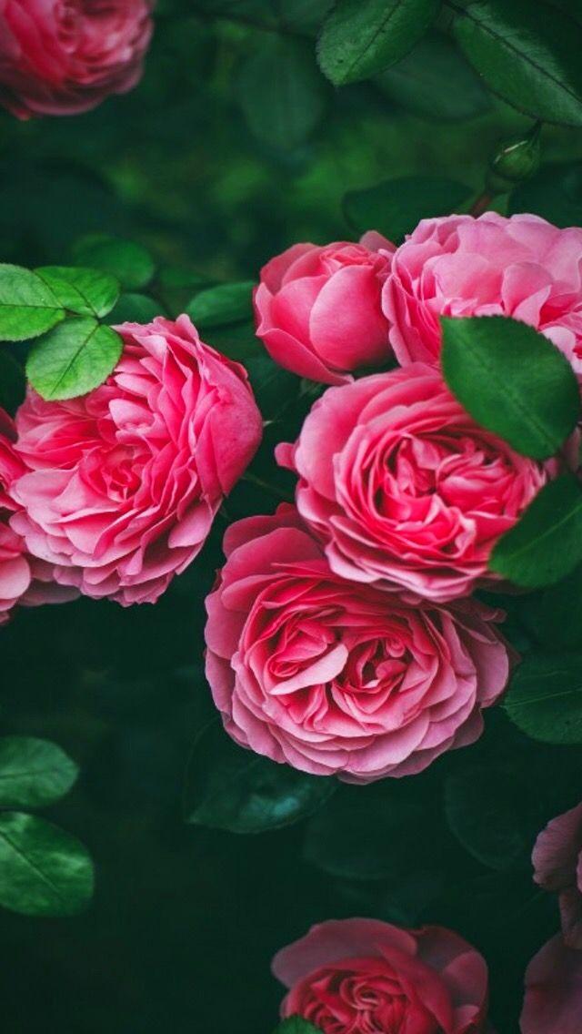 Wallpaper iPhone/beautiful flowers ⚪️