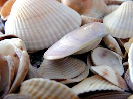 How to clean seashells.  Extra tip: Soak in hot water, baking soda and vinegar for 30 minutes. Next, rinse seashells, scrub with toothbrush and dishsoap, rinse. Place seashells with bleach and hot water. Let sit for atleast an hour, preferably overnight.