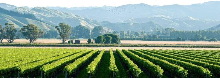 Welcome to Gisborne Wine » Gisborne Wine New Zealand
