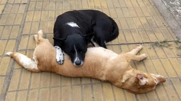 La conmovedora reacción de un perro callejero al ver que atropellaron a una perra  El compañerismo animal quedó en evidencia en esta historia que se viralizó en Facebook. Foto: Facebook