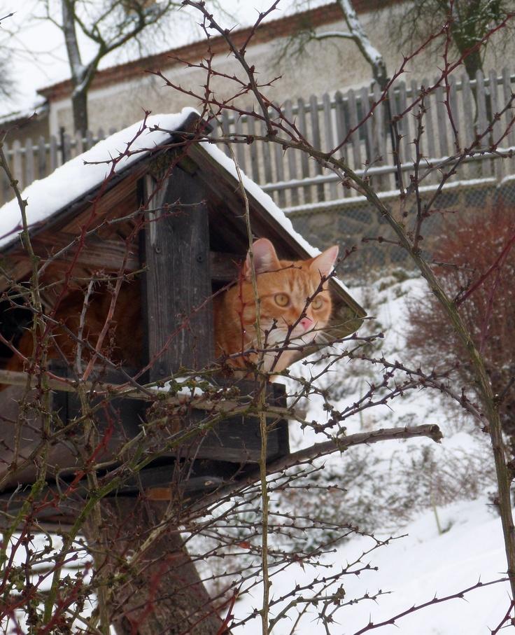 Cat in the birdhouse.