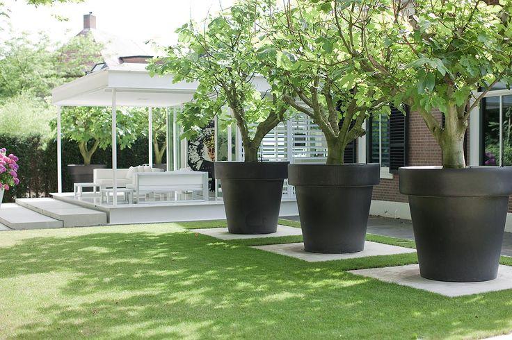 Bomen in grote potten, op een tegel