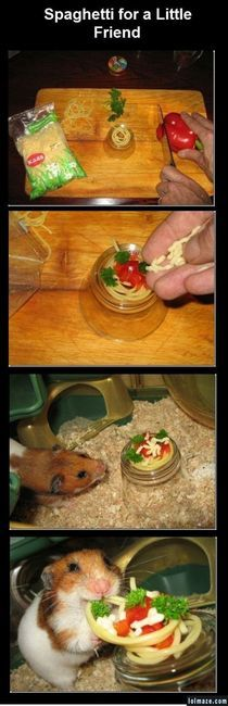 Hamster spaghetti! OHMYGOD this is cute!: Spaghetti Dinners, Friends, So Cute, Pet, So Happy, Funny, Hamsters, Adorable, Animal