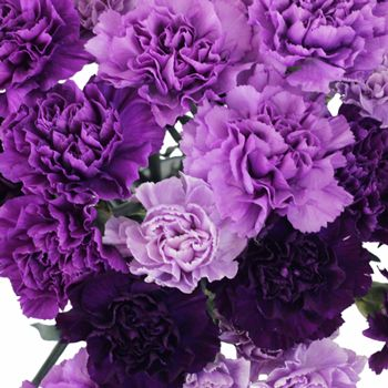 I'm going to give you examples of lavender flowers we can use: here, carnations
