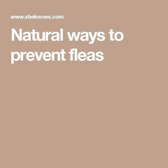 Natural ways to prevent fleas
