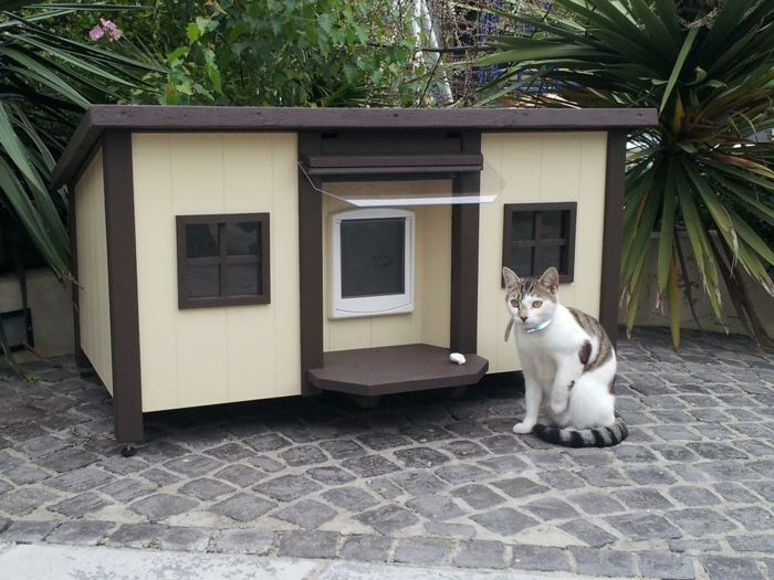 les 25 meilleures id es de la cat gorie abri pour animaux sur pinterest chiens de refuge. Black Bedroom Furniture Sets. Home Design Ideas