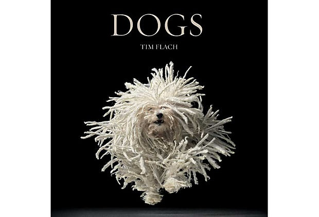 A great book by photographer Tim Flach. Also his book Equus on the subject of horses is fantastic.