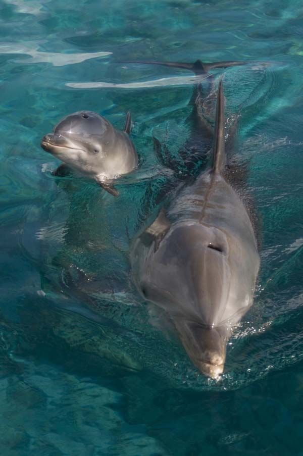 24.) Mississippi: Bottlenose Dolphin | 50 Adorable Baby Animals Organized By State. The Cutest State Animals.