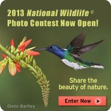 2013 National Wildlife Photo Contest