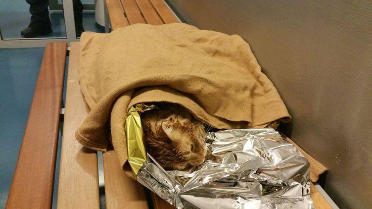 NH | Amsterdamse politie ontfermt zich over verregende kat Kinnie