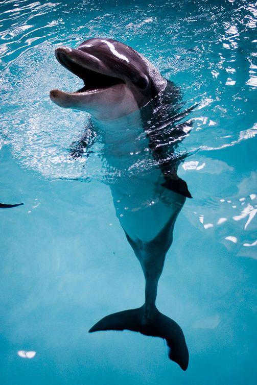 Delfinaario perui näytöksiään kiiman takia - delfiinit pitivät omaa kivaa