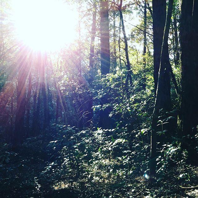 【monolith_pro】さんのInstagramをピンしています。 《お正月休みは自然と戯れて、のんびり過ごしました🌿  #ヴィーダフル#モノリスプロ#宮崎#関之尾の滝#自然#ナチュラル#森林浴#森#美容室#美容師#美容院#サロン#癒し#リラックス#のんびり#散歩#山#nature#natural#forest#wood#里帰り#楽しかった#japan#miyazaki#丁寧な暮らし#ライフスタイル#lifestyle》