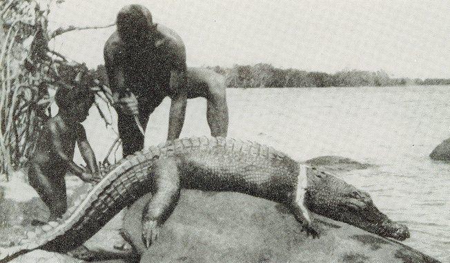 crocodile hunting