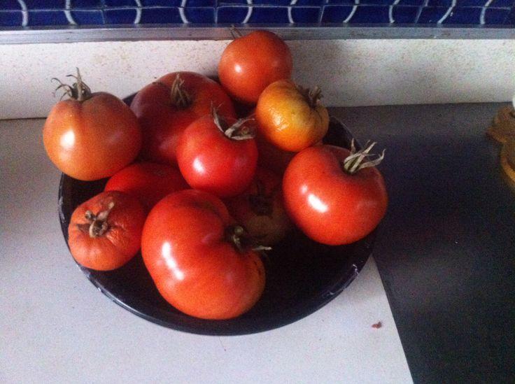 tomates de la huerta de la nonna