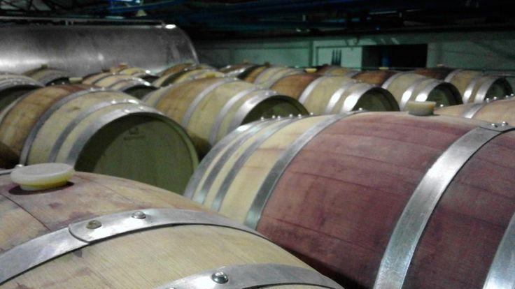 Barrel Store for aging of wine is French Oak Barrels - Rawsonville area