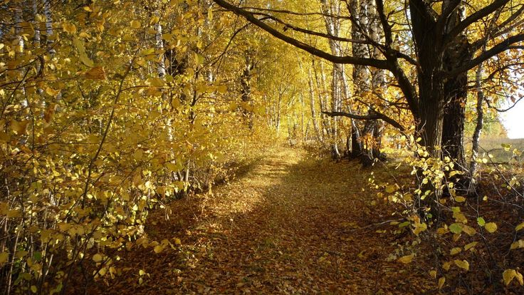 http://www.wallpapers4u.org/wp-content/uploads/wood_trees_leaf_fall_autumn_birches_46072_1920x1080.jpg