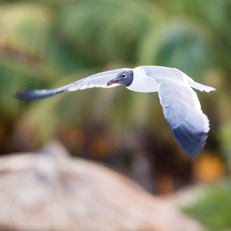 Fly for food by Davide Manzoni  on 500px