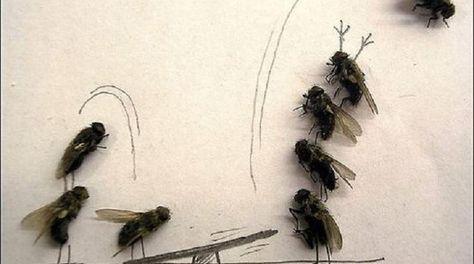 que faire contre les mouches voici un r pulsif fait maison tr s efficace astuces. Black Bedroom Furniture Sets. Home Design Ideas