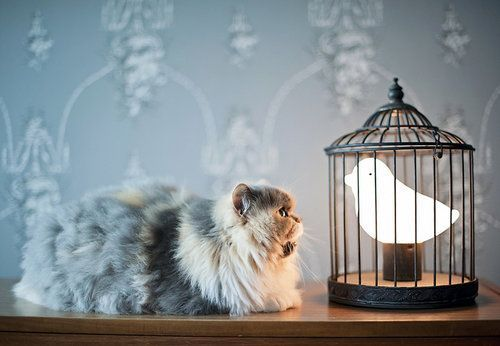 Want this lamp!: Lamps, Kitty Cat, Friends, Night Lights, Funny Cat, Pet, Kittens, Birds, Animal
