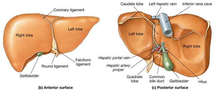 Anatomy degree online