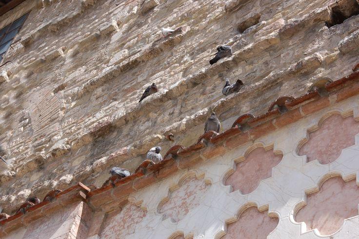 Perugia: Danger!!! Pigeons!!