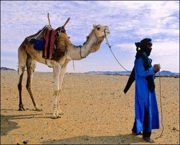 chameau-et-touareg