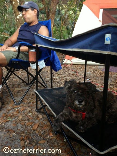 Outdoor Gear for Dogs: My new Quik Shade Pet Shade! Love this for our #camping trips. #quikshadepetshade