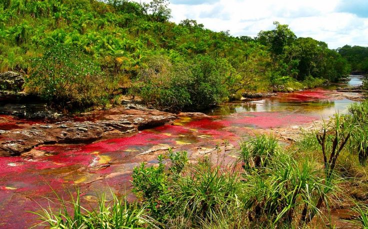 Caño Cristales River, Colombia - World's Strangest Natural Wonders | Travel + Leisure