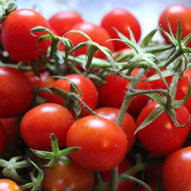 Continuing my love affair with Italian Tomatoes  (Whenever I talk about my newfound Italian loves I am always tempted to write Italian Stallions just to satisfy a dear friend who is completely obsessed, but I am sorry, my loves remain focussed on food.)