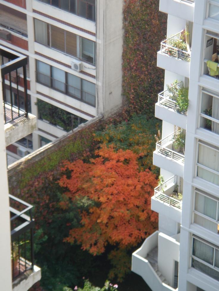 otoño en mi ventana
