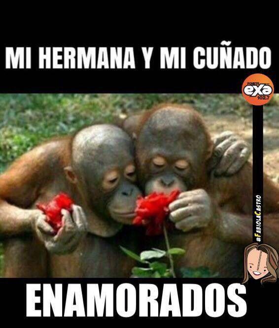 Mi hna y mi cuñado Memes | Orangutanes, Animales, Imagenes ...