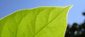 Panchakarma Treatment For Body Detoxification
