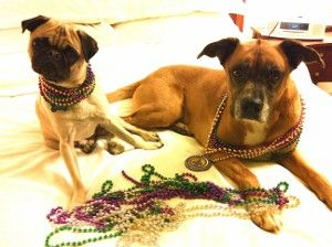 Dog Friendly Places To Stay In New Orleans
