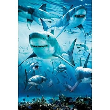 Shark Infested Poster Art Print Poster   Hereu0027s The Poster We Just Got For  Your Room. I Like That The Sharks Look Pretty Friendly ❤